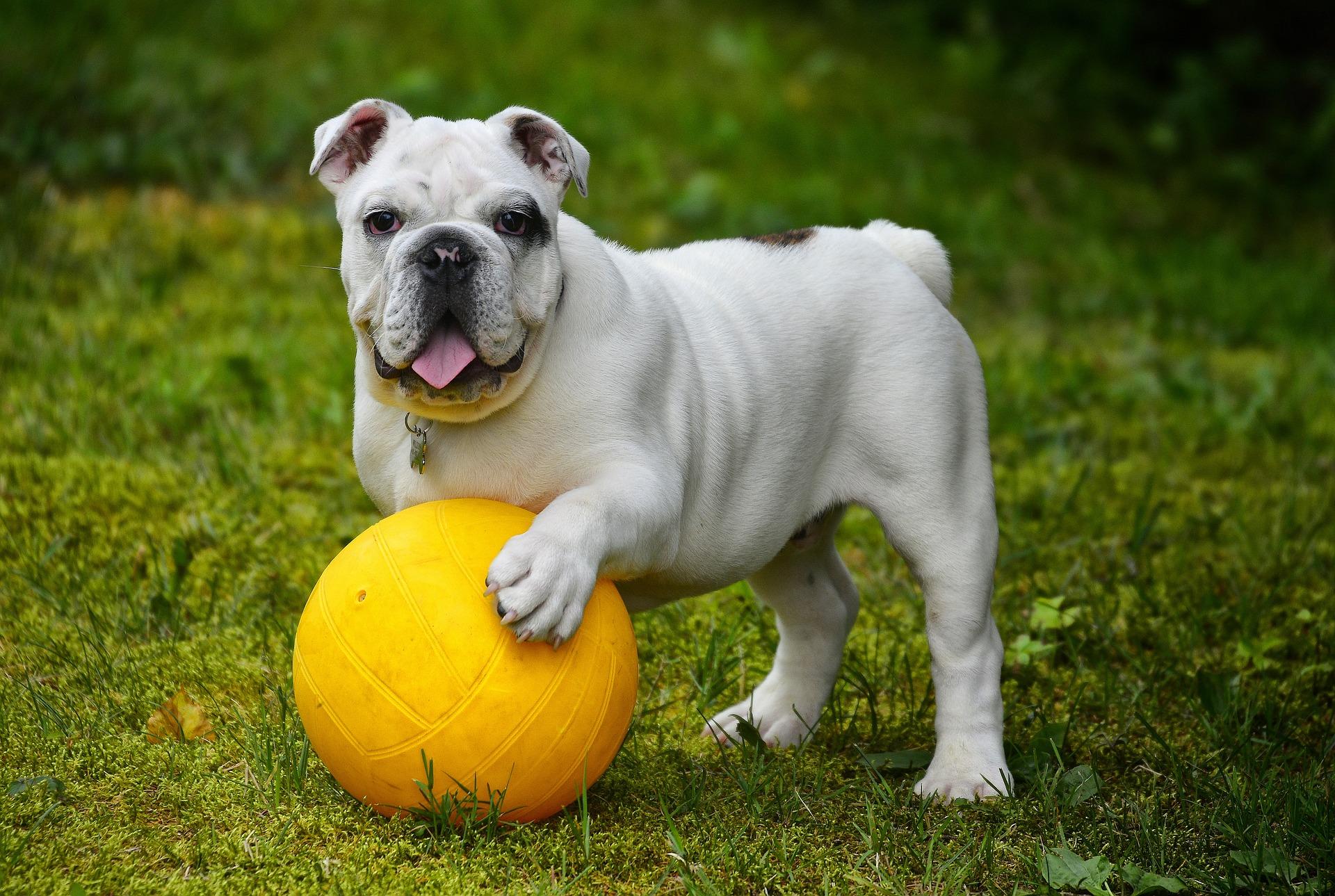 犬が認識できる色